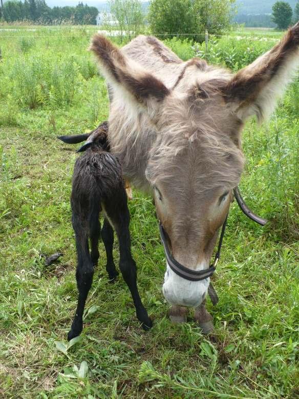 alfred naissance3