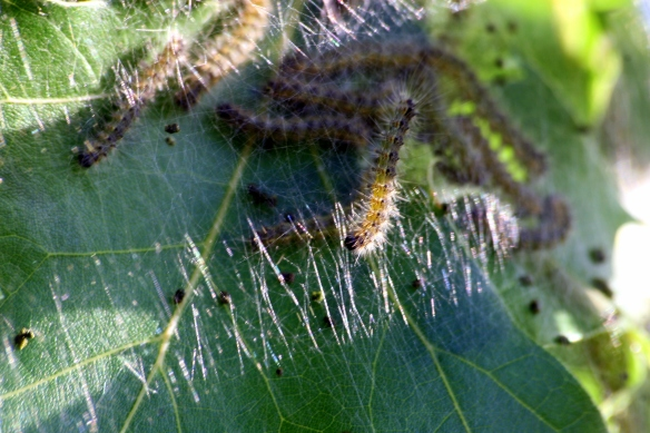nid de papillons